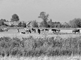 한국 농업의 미래, '덴마크 모델'에서 찾자