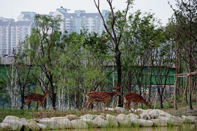 푸른 유혹, 서울의 숲