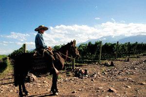 포도밭-가족 이름 붙인 와인으로 명성과 이익 함께 거머쥔다