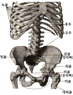 치골, 골반 뒤틀린 변강쇠·옹녀는 없다