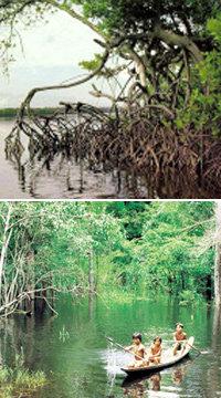 환경을 보호하려면 우선 파괴해야 한다?