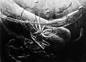 크라켄과 대왕오징어