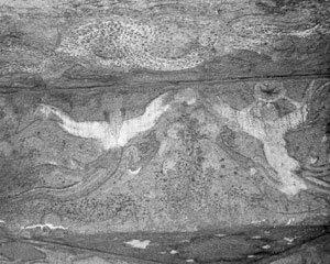 지안(集安)에서 단둥(丹東)까지, 고구려 유적 답사기