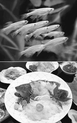 물고기도 지능 있고 고통 느낀다…생선회 먹는 것은 동물학대?