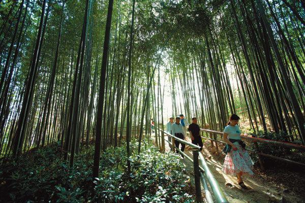 담양 대나무 축제