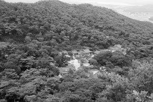 전등사의 명상 숲