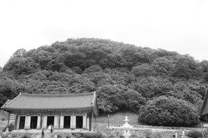 선운사 단풍 숲