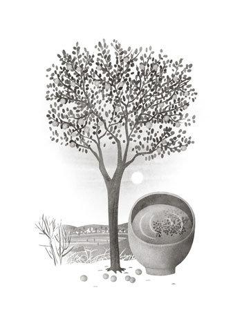 살구나무에 대한 경배