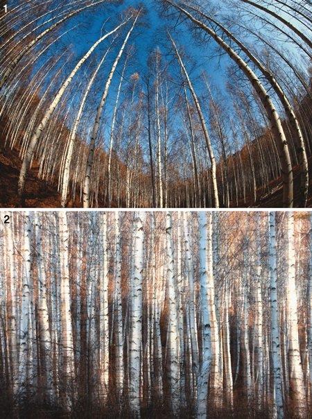 속삭이는 자작나무 숲