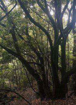 되살아난 숲, 부푼 꿈