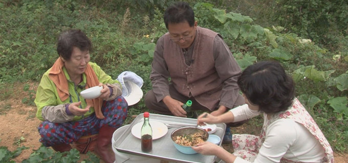 혈관 건강 돕는 차나무 씨앗…3대 성인병 억제효과 히카마