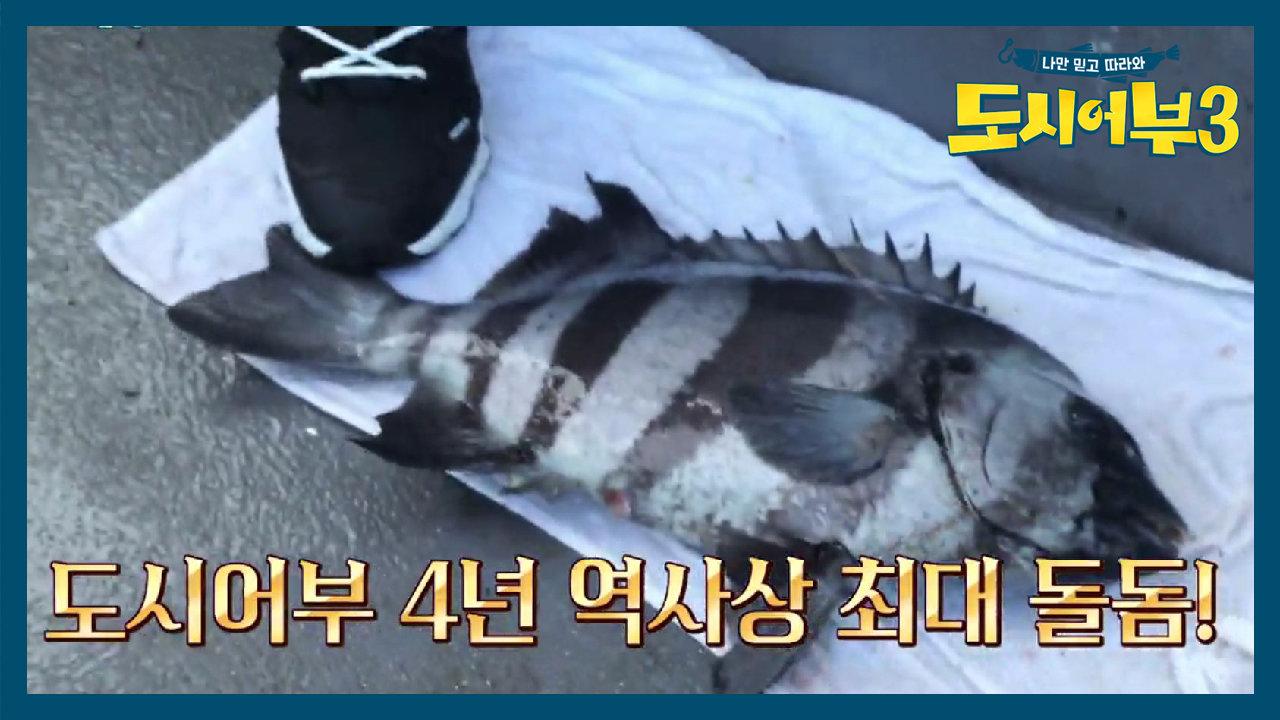 도시어부 4년 역사상 최대 돌돔 낚시 종료 5분전 박군의 완벽한 엔딩!