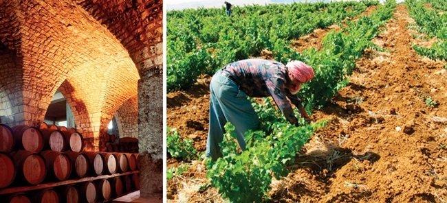 장인정신이 빚은 정열의 와인