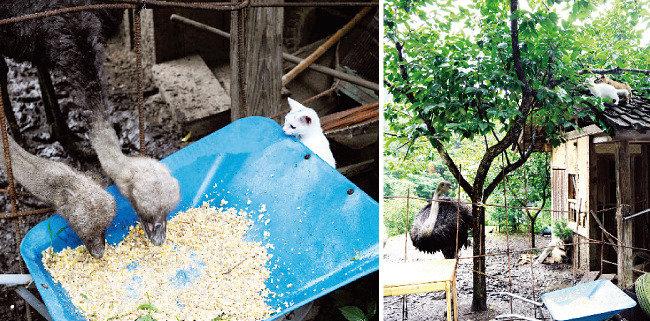 사진집  '후쿠시마의 고양이'