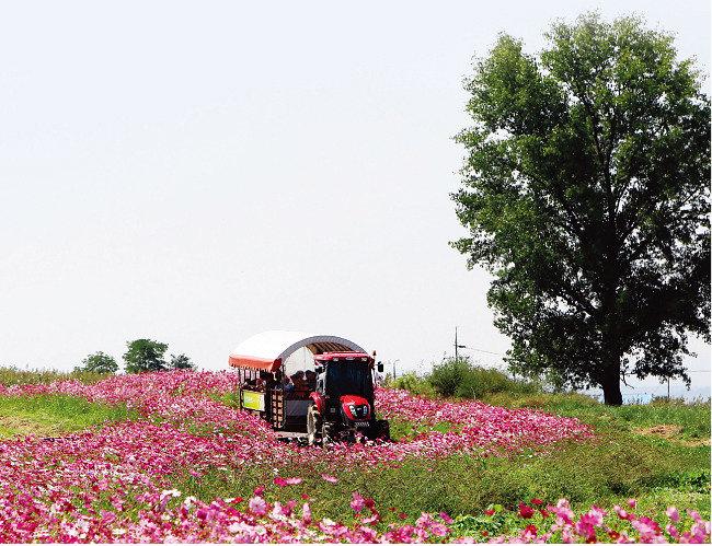한국의 알프스 목장, 농협 안성팜랜드_그곳에 가면 누구나 목동이자 자연인