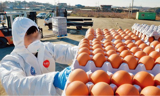 달걀 수입, 중·대형마트만 웃었다