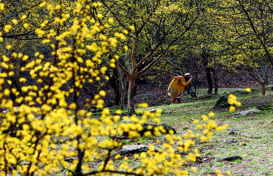찰나의 봄, 산수유