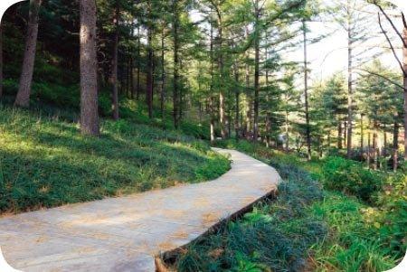 초록 숲으로 '5월의 산책'
