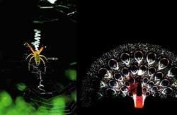 거미에서 뽑아내는 섬유산업의 미래