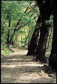 임금님 거닐던 숲 … 맨발로 걸어보자