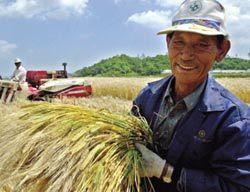'가격 or 품질'  농산물 그것이 문제로다