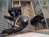 애물단지 곰 때문에 … 사육업자들 죽을 맛