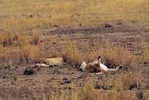 사자가 지배하는 '야생동물의 보고'