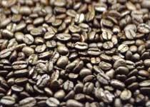 커피 발견한 양들의 전설 外