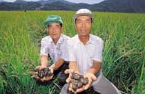 """""""고품질 쌀 생산만이 남는 장사 비결"""""""