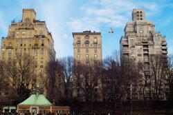 뉴욕 도심 '붉은꼬리매' 대소동