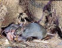 '20만 마리 쥐를 소탕하라' 지상 최대 작전중 外