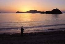 팔손이나무 반겨주는 '섬의 낙원'