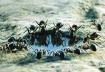 남미産 불개미 떼 습격… 호주 브리즈번 주민들 공포 外
