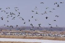 1백만 마리 겨우살이 '새의 나라'