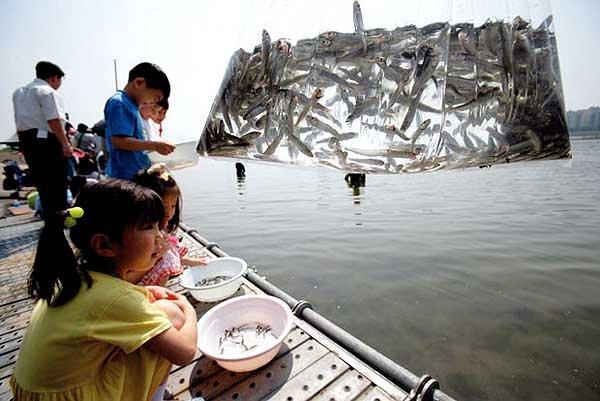 큰물로 떠나는'銀魚의 꿈'