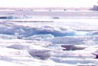 북극해 얼음 50년 안에 다 녹는다?