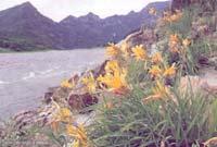 물길 따라 흐르는 '꽃술의 향연'