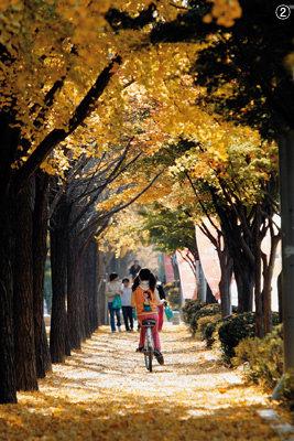"""""""우수수""""… 가을이 떨어진다"""