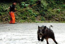 멧돼지 속세로 하산한 까닭은