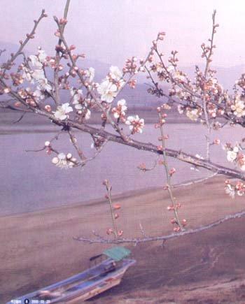 매화향 감미로운 '섬진강의 봄'