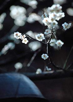 아찔한 꽃내음, 질펀한 꽃잔치