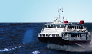 대한해협 고래는 억울하다?