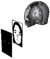 나의 뇌, 검진해볼까