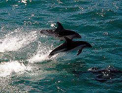 눈으로 고래사냥, 짜릿한 바다 이야기