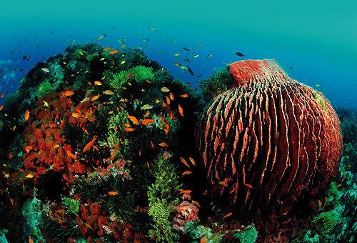 바다 속은 신약 개발 보고