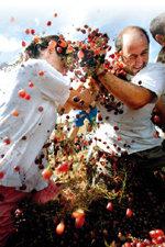 와인사전|와인 포도 품종