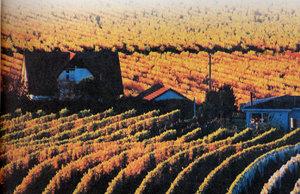 와인사전|세계의 와인