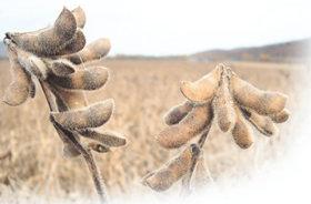 맛있는 콩은 재배하기 나름!