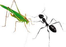 개미와 베짱이 뒤집어보기