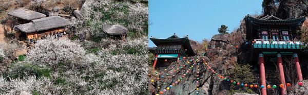 매화 꽃대궐서 화려한 봄마중